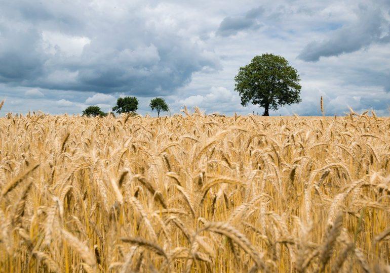 GPW chce promować handel na Platformie Żywnościowej. Inicjatorem resort rolnictwa